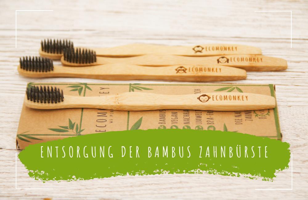 Entsorgung-einer-Bambus-Zahnbürste-ecomonkey
