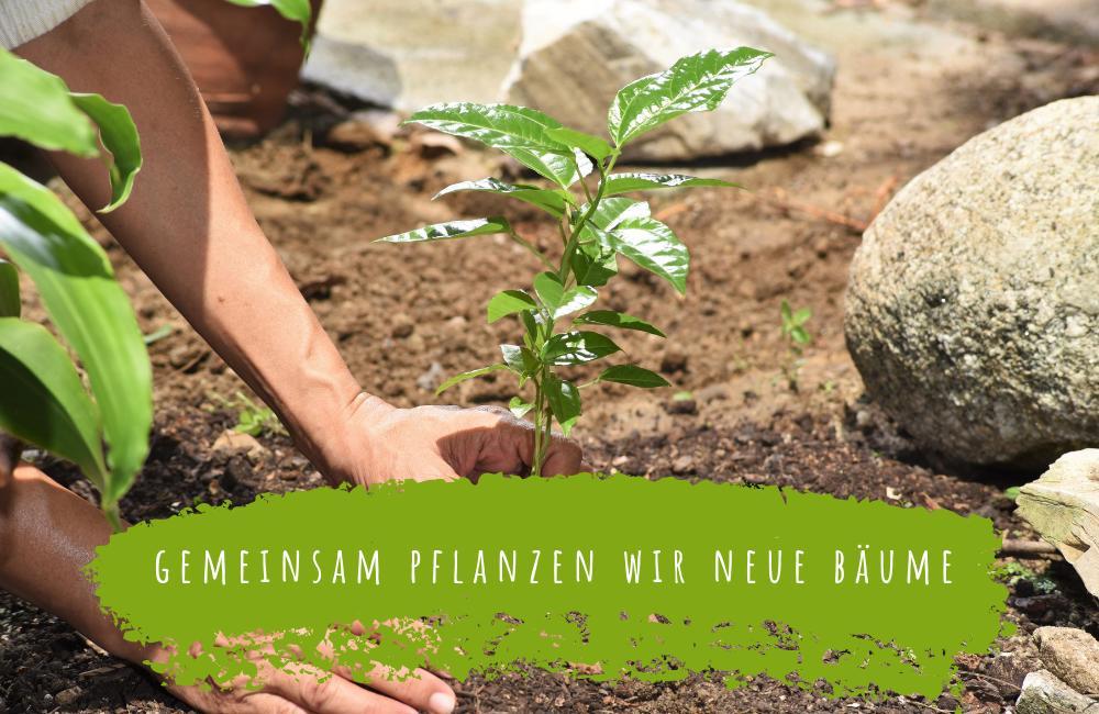 we plant trees bäume pflanzen