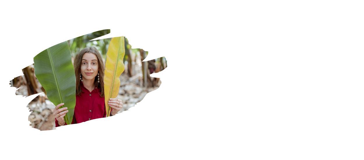 Bananenblätter Produkte